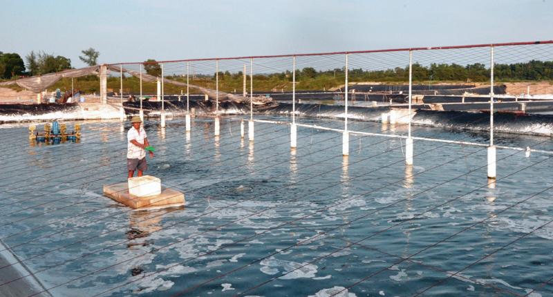 thủy sản Quảng Ninh, nuôi tôm, nuôi cá, thủy sản, vùng nuôi thủy sản