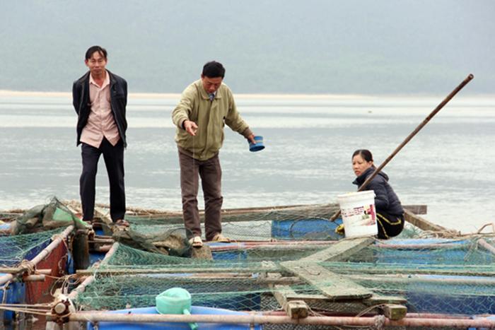 nuôi thủy sản, nuôi cá nuôi hàu, nuôi cá lồng, nuôi cá, nuôi hàu treo dây, nuôi cá Hà Tĩnh