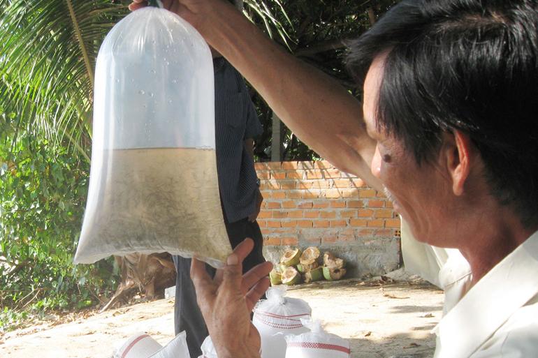 Quản lý tôm giống, chất lượng tôm giống, giống tôm, nuôi tôm, tôm giống, nuôi tôm