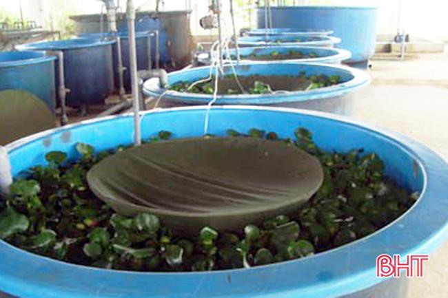 Sản xuất cá giống, cá giống, trại cá giống, giống cá, trại cá giống