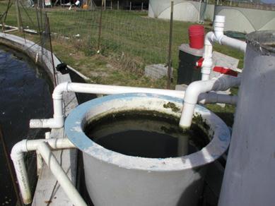 biofloc, hệ thống biofloc, công nghệ biofloc, biofloc quy mô nhỏ, nuôi cá