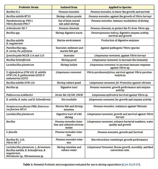 men vi sinh, probiotics, prebiotics, biofloc, mô hình nuôi tôm, chế phẩm sinh học