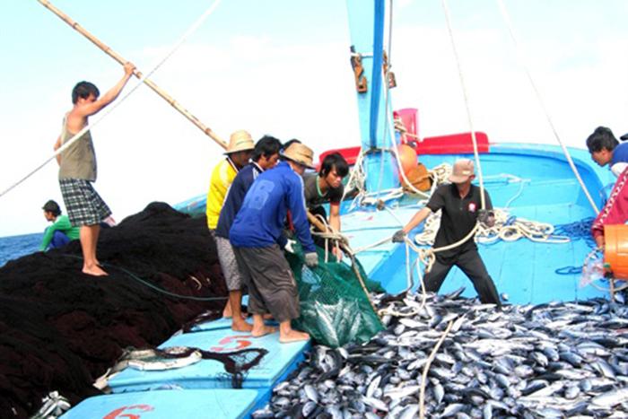 cá ngừ, thủy sản, đánh bắt thủy sản, khai thác thủy sản, cá ngừ Bình Định