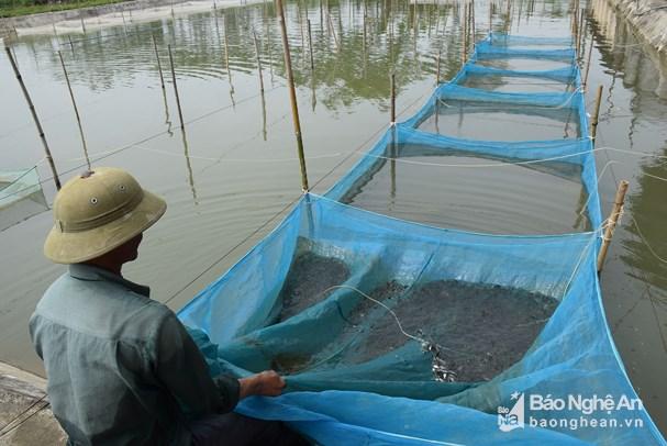 giống cá, giống cá đặc sản, cá đặc sản, cá giống, nuôi cá, nuôi cá Nghệ An