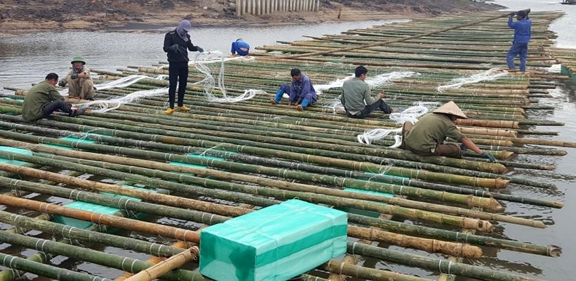 nuôi hàu, nuôi ngao, thủy sản, nuôi trồng thủy sản, vùng nuôi thủy sản, thủy sản Quảng Ninh