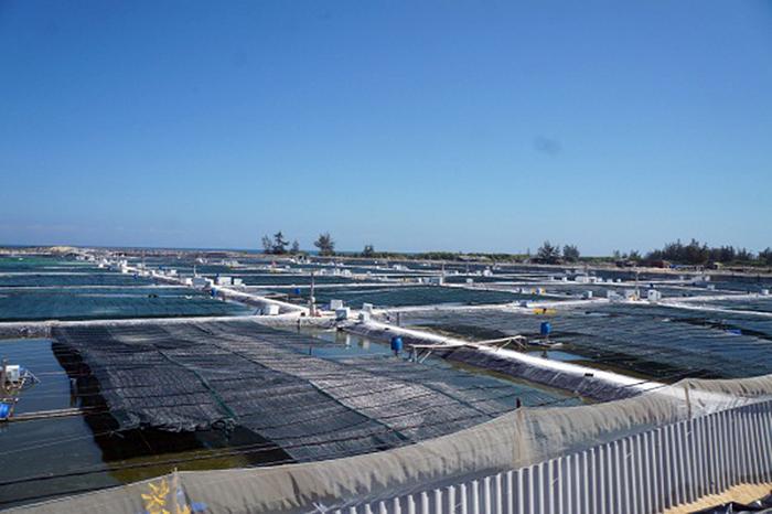 nuôi tôm, mô hình nuôi tôm, trang trại nuôi tôm, nuôi tôm Quảng Nam, doanh nghiệp nuôi tôm