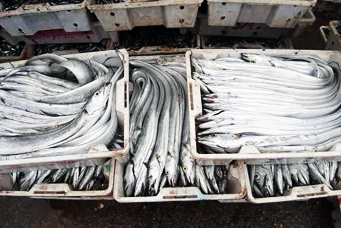 đánh bắt thủy sản, thủy sản, khai thác thủy sản, thủy sản Nghệ An