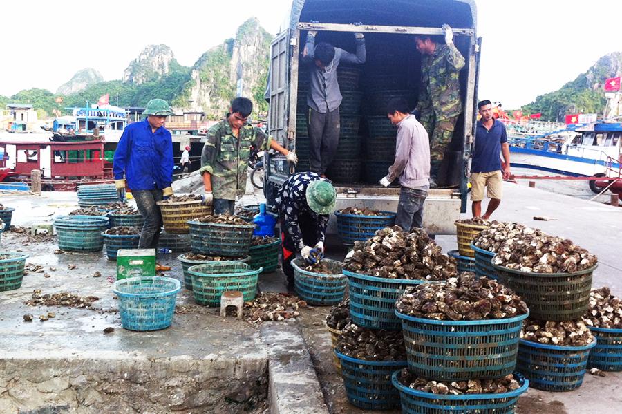 tàu cá, tàu cá Quảng Ninh, đánh bắt thủy sản, nghiệp đoàn nghề cá, nghề cá