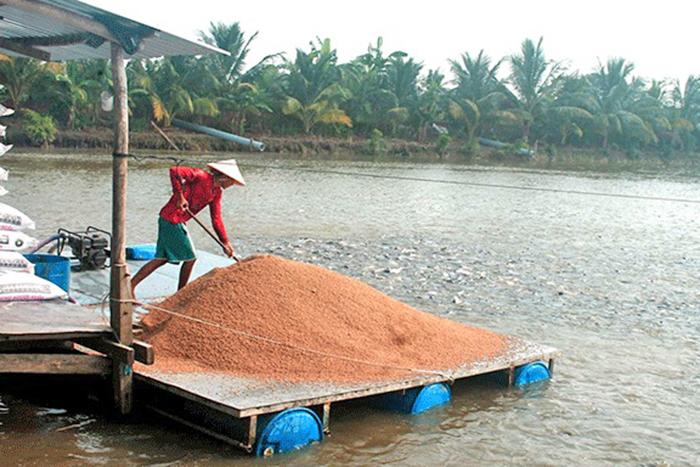 Cá tra, giống cá tra, sản xuất giống cá, nuôi cá, nuôi cá tra, giá cá tra