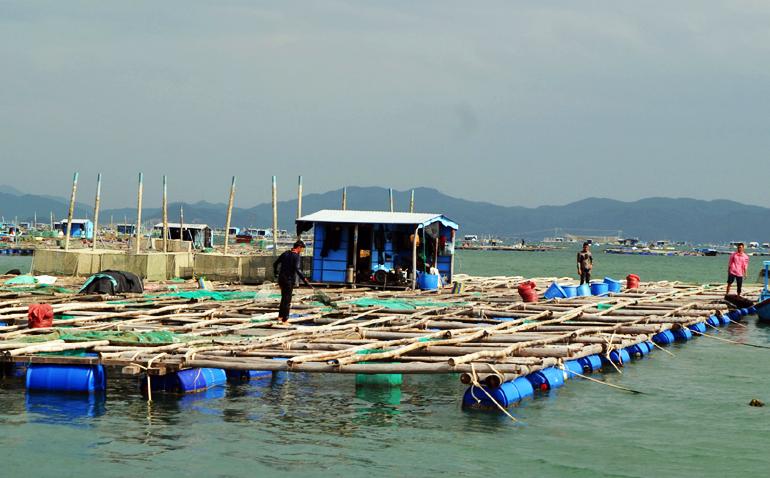 Nuôi tôm, thủy sản, nuôi trồng thủy sản, vùng nuôi thủy sản, nuôi tôm thẻ