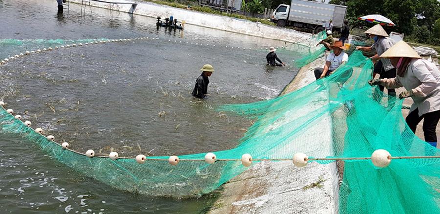 nuôi cá biển, nuôi cá Quảng Ninh, nuôi tôm, nuôi trồng thủy sản