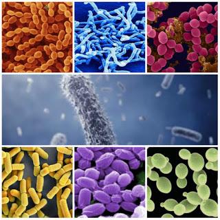 men vi sinh, probiotics, hỗn hợp men vi sinh, nuôi tôm, nuôi tôm thẻ