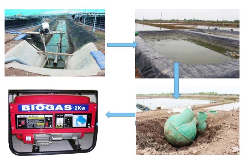 biogas nuôi tôm, nuôi tôm, nuôi tôm tiết kiệm điện, mô hình nuôi tôm