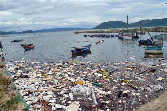 tảo độc, nuôi tôm, nuôi tôm hùm, bệnh tôm, môi trường nuôi