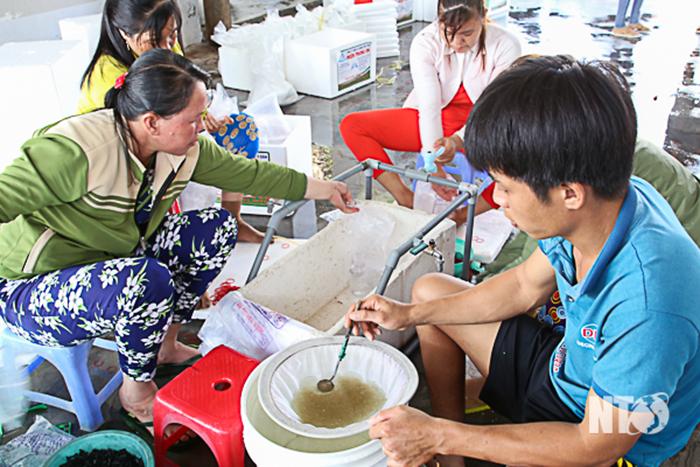 tôm giống, sản xuất tôm giống, tôm giống Ninh Thuận, thủy sản