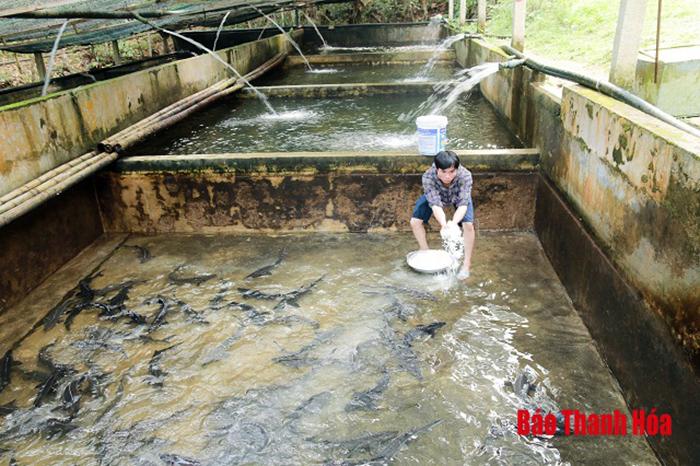 nuôi cá hồi, trang trại nuôi cá, nuôi cá hồi Thanh hóa, trang trại cá hồi, nuôi cá