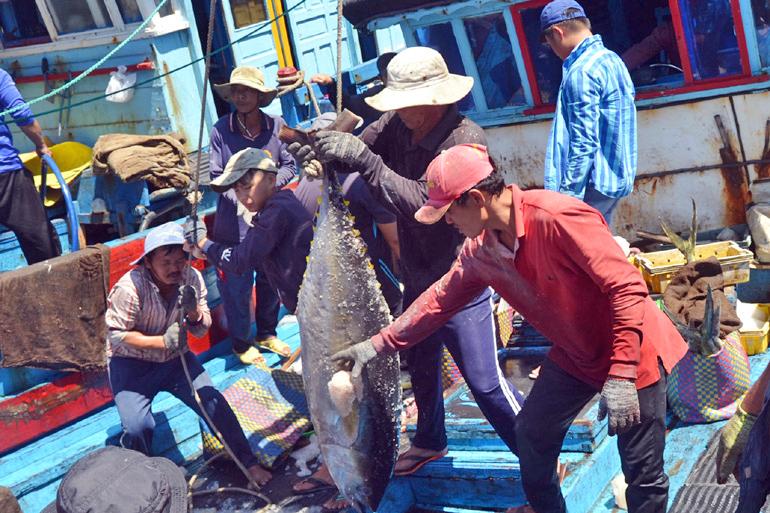 cá ngừ, đánh bắt cá ngừ, khai thác thủy sản, thủy sản, đánh bắt, giá cá ngừ