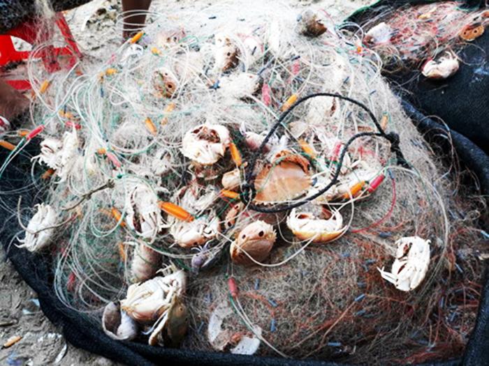 đặc sản, thủy sản đánh bắt thủy sản, càng cúm, hải sản