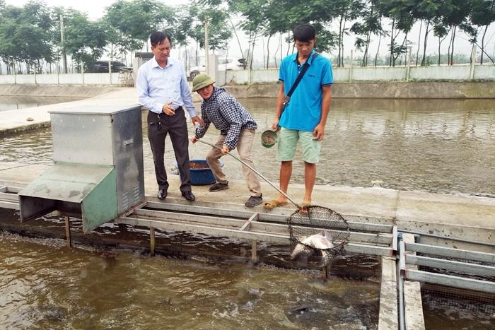nuôi cá, mô hình nuôi cá, nuôi cá sạch, nuôi cá Hải Dương, sông trong ao