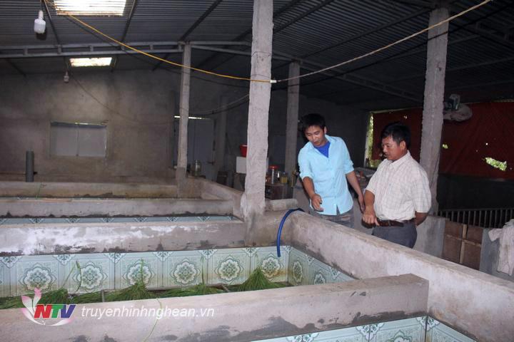 nuôi lươn, mô hình nuôi lươn, nuôi lươn trong bể xi măng, nông dân làm giàu