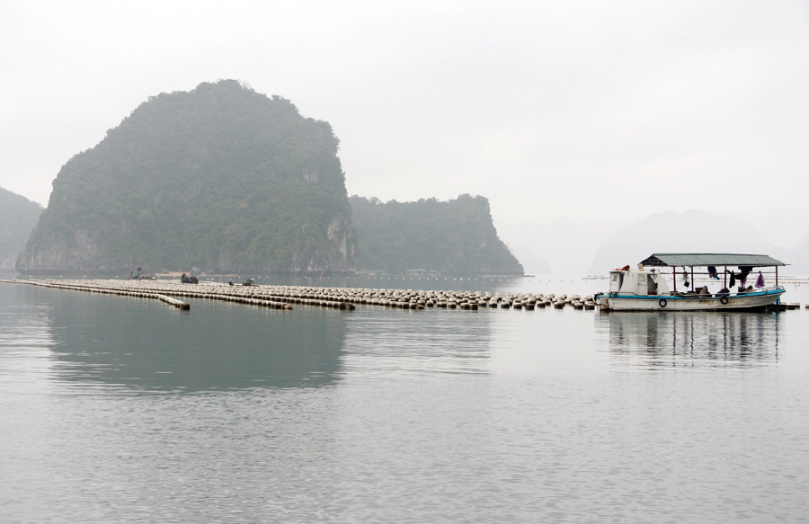 nuôi ngao, nuôi ngao giá, ngao giá, nuôi ngao Quảng Ninh, thủy sản
