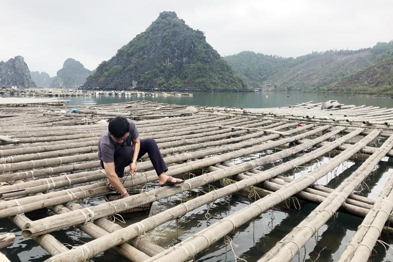 thủy sản, nuôi trồng thủy sản, chính sách thủy sản, nuôi ngao, nuôi ngao giá