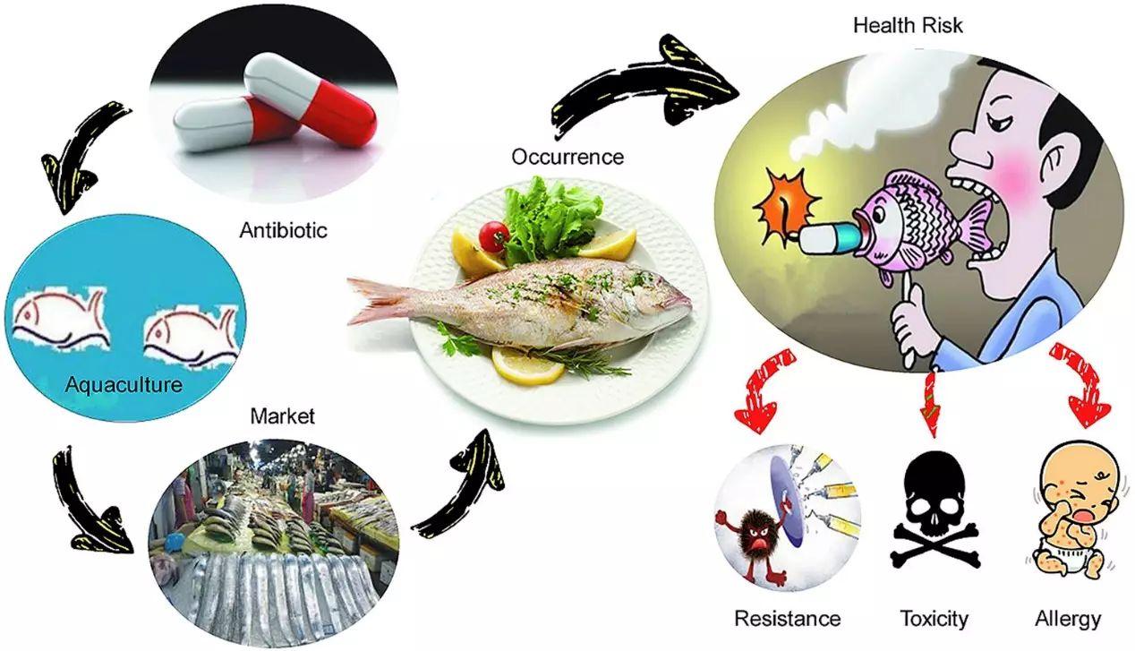 chất cấm, nuôi tôm, kháng sinh, kháng sinh cấm, tác hại kháng sinh