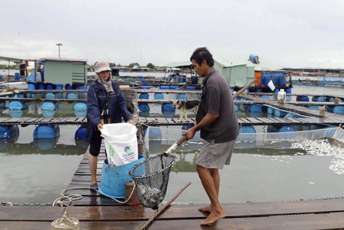 nuôi cá, nuôi cá Vũng Tàu, mô hình nuôi cá, nuôi cá lồng, nuôi cá biển, cá chết