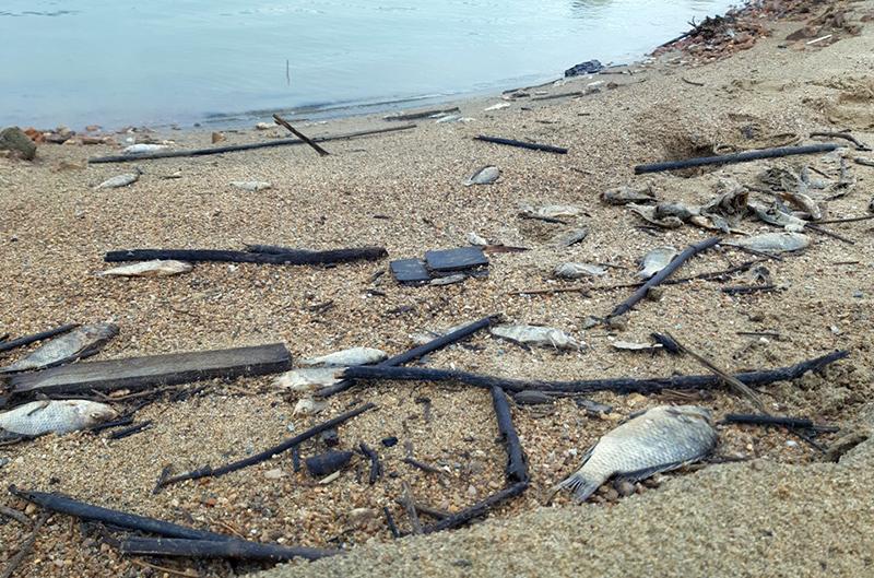 nuôi cá, nuôi cá lồng, nuôi cá lồng hồ, mô hình nuôi cá, cá chết, môi trường
