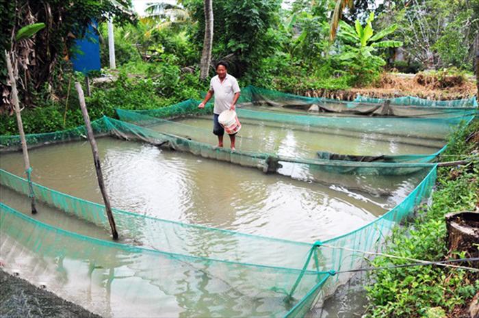 cá giống, sản xuất cá giống, nuôi cá, nuôi cá mùa lũ, giá cá giống
