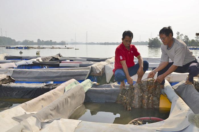 nuôi thủy sản, vùng nuôi thủy sản, nuôi cá lồng, nuôi cá, nuôi cá Vũng Tàu, nuôi cá biển