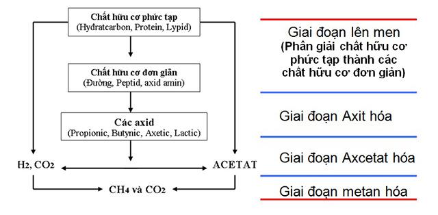 xử lý nước, xử lý nước nuôi tôm, nuôi tôm thẻ, mô hình nuôi tôm, hệ thống biogas