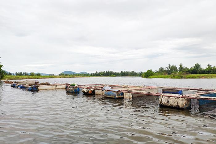 nuôi cá, nuôi cá vược, mô hình nuôi cá, nuôi cá lồng, nông dân làm giàu