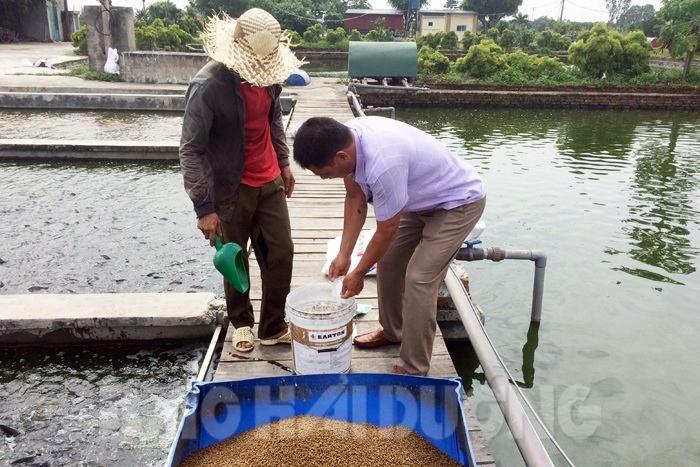 nuôi cá, mô hình nuôi cá, công nghệ biofloc, biofloc, kỹ thuật nuôi cá