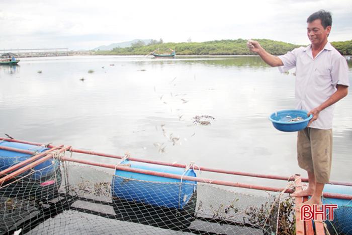 Ông Nguyễn Minh Hòa (xóm Sông Hải) hiện đang nuôi 3 lồng cá với trên 1.000 con cá chẽm