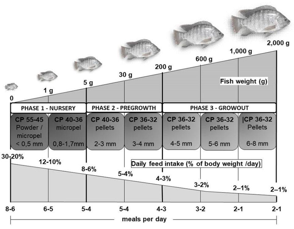 thức ăn cho cá rô phi, nuôi cá rô phi, cá rô phi, quản lý thức ăn, nuôi cá