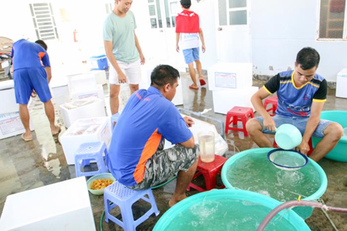 sản xuất giống, sản xuất giống Ninh Thuận, sản xuất giống tôm, tôm giống