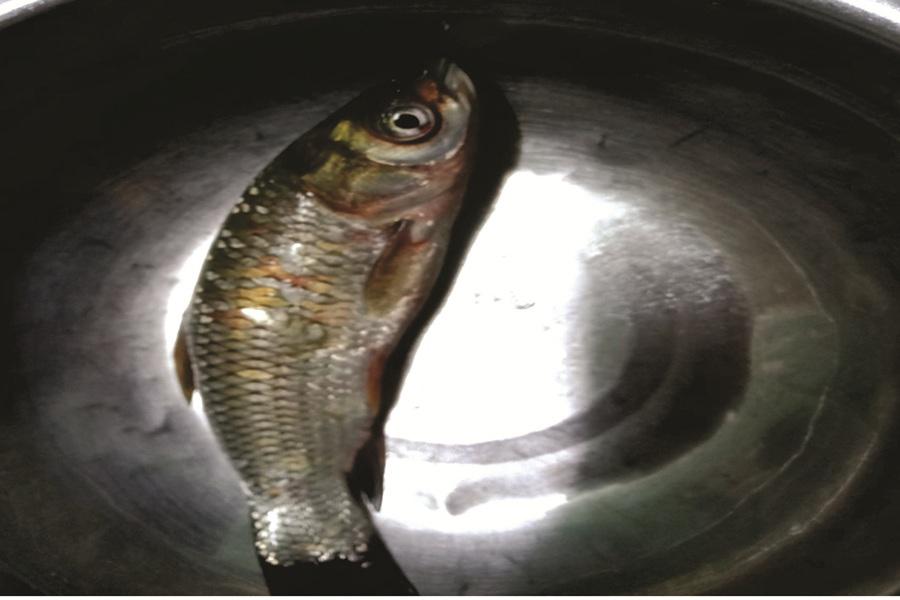 cá trắm cỏ, nuôi cá trắm cỏ, kỹ thuật nuôi cá, nuôi cá trắm, nuôi cá