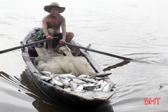 nuôi cá, cá chết, nuôi cá chẽm, nuôi cá Hà Tĩnh, cá chẽm