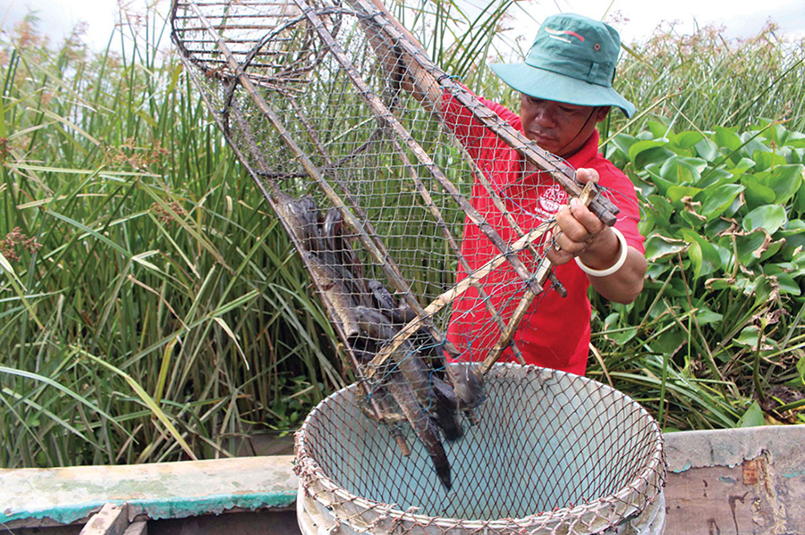 thủy sản, đánh bắt thủy sản, giá cá, giá cá đồng