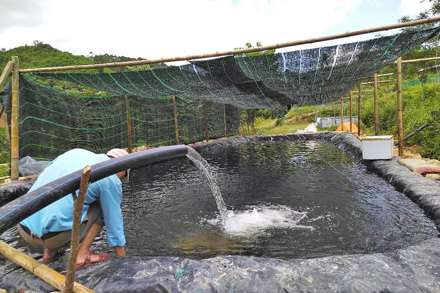 nuôi cá, nuôi cá tầm, kỹ thuật nuôi cá tầm, kỹ thuật nuôi cá