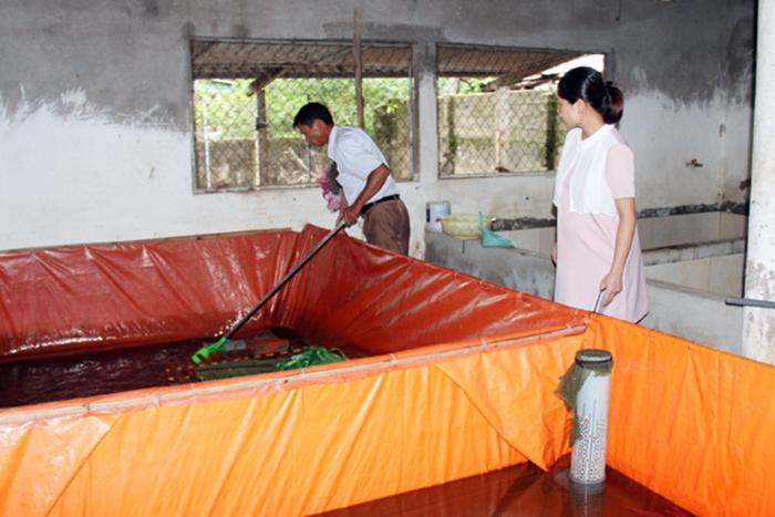 nuôi lươn, giá lươn, mô hình nuôi lươn, nuôi lươn trong bể xi măng