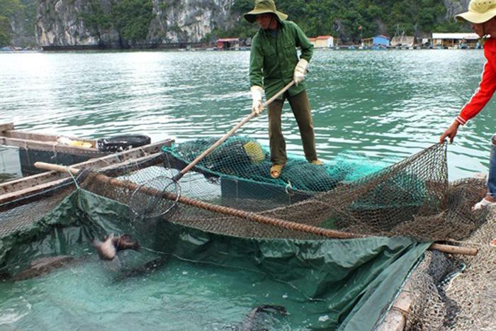 nuôi cá, nuôi trồng thủy sản, thủy sản