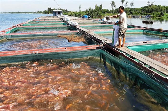 nuôi cá, nuôi trồng thủy sản, nông dân làm giàu, mô hình nuôi cá