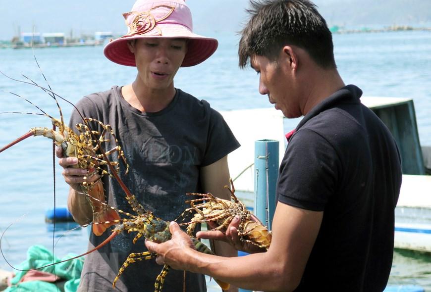 thủy sản, xuất khẩu thủy sản, thị trường Trung Quốc, truy xuất nguồn gốc
