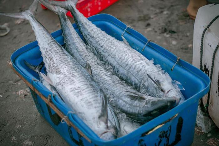 Thu hoạch cá biển