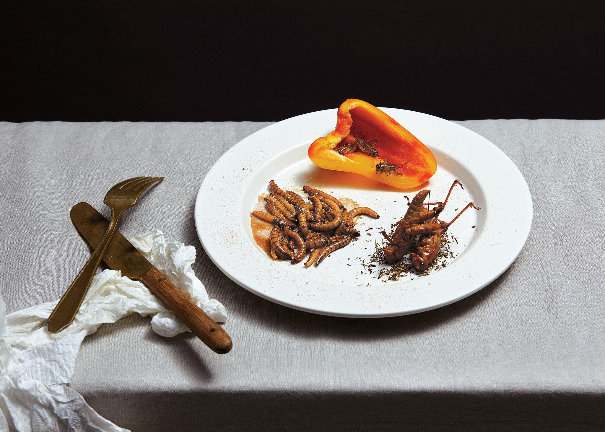 ăn côn trùng