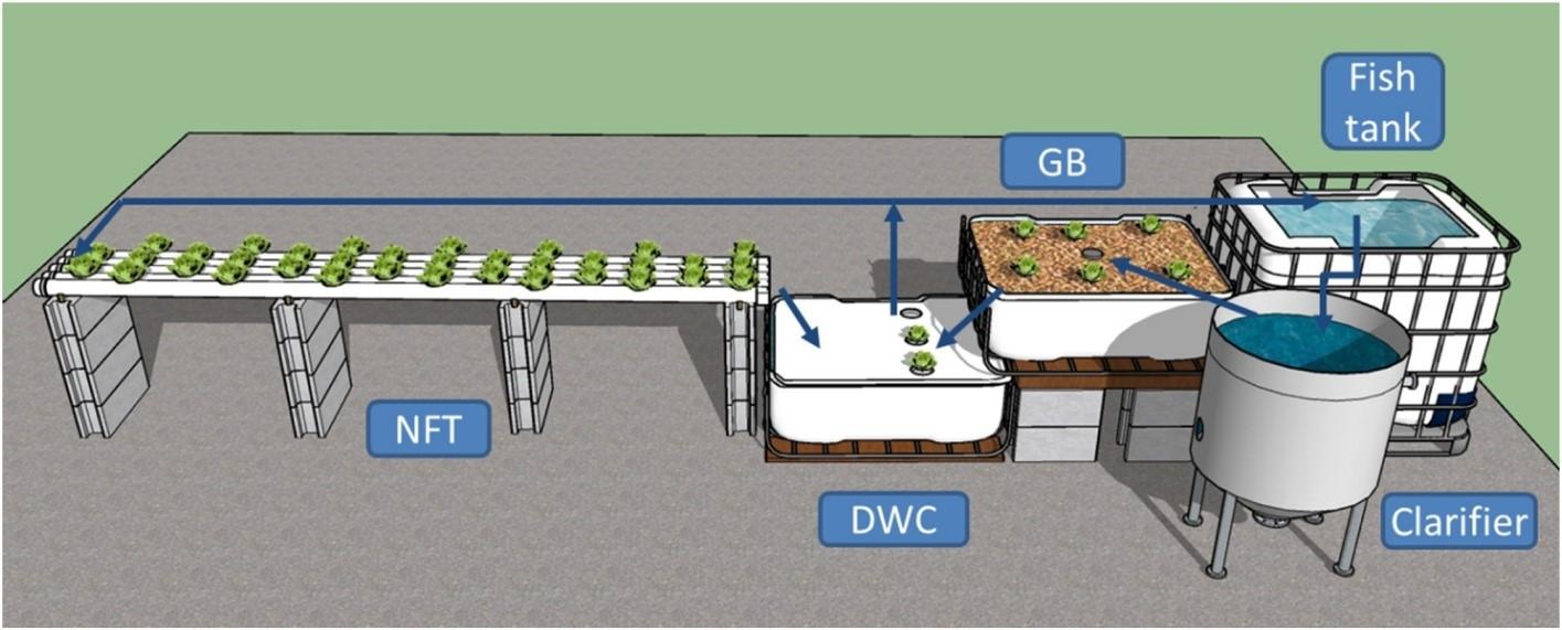 setup aquaponics