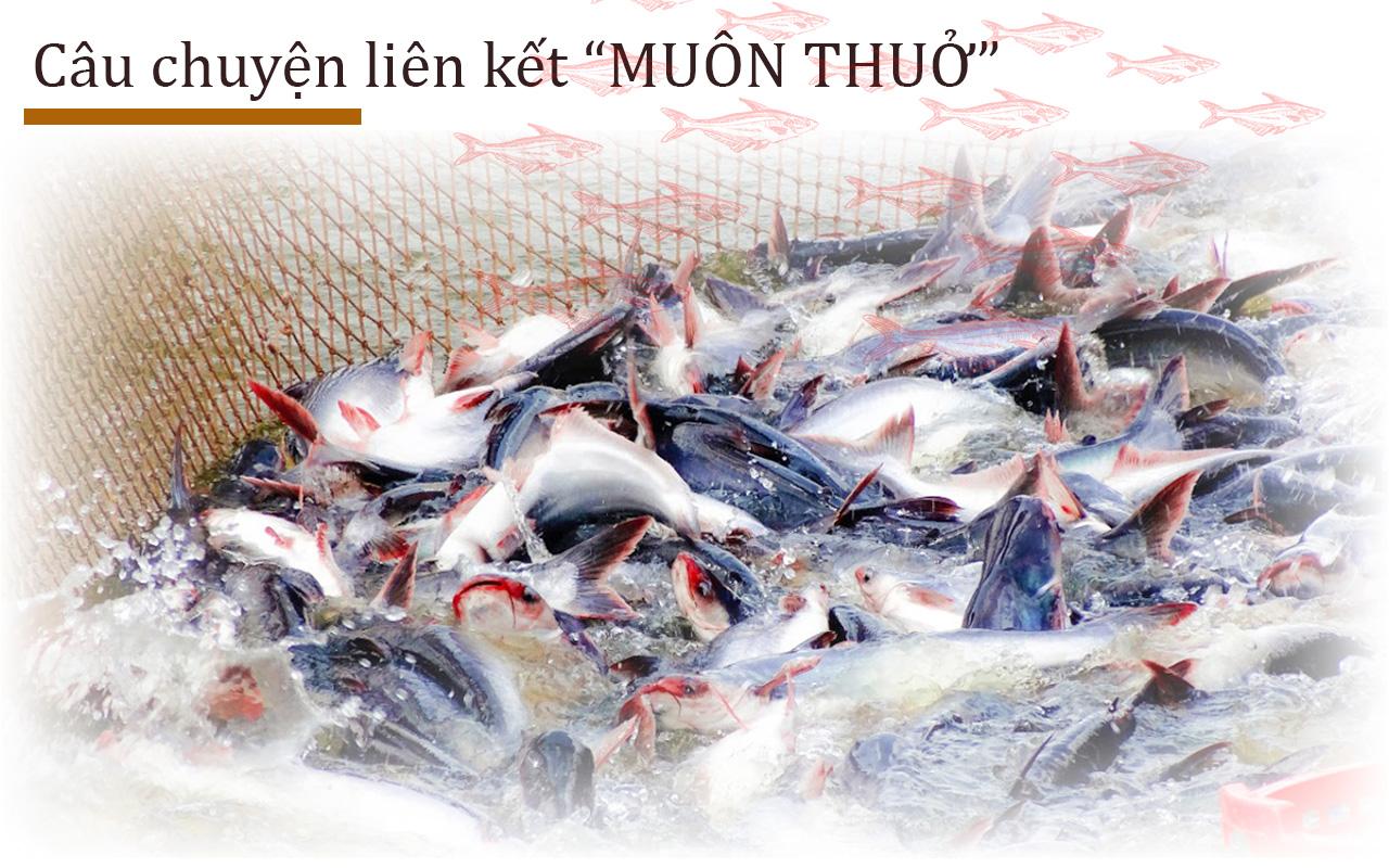 chuỗi liên kết cá tra