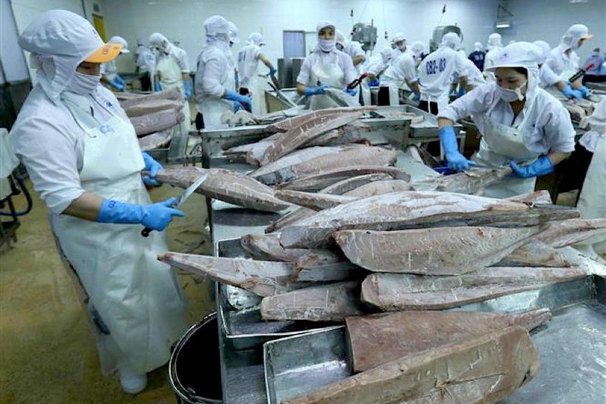 chế biến cá ngừ